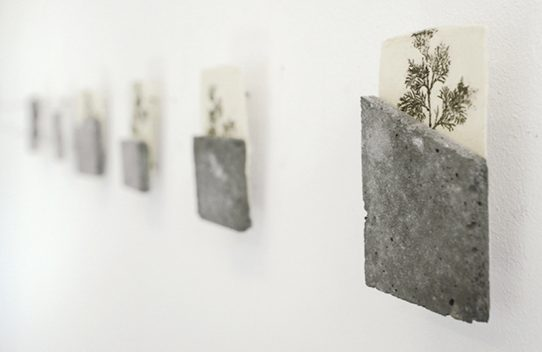 White Cedar, 2016. Transfert sur papier et béton, 7,8 x 4,7 cm © Nicolas Muller