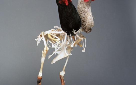 [AGENDA] 04.03→09.07 - À poils et à plumes (Volet 2 de L'Odyssée des animaux) - Musée de Flandre Cassel