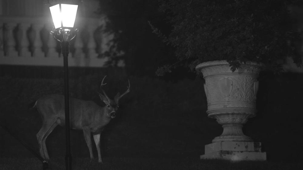 Half Moon , 2012 Vidéo, 8'59'' Ce projet a été réalisé à la Villa Montalvo, Saratoga, Californie, dans le cadre de la résidence Lucas Art Program. / This project has been made at the Villa Montalvo, Saratoga, California, while in residency at the Lucas Art Program.