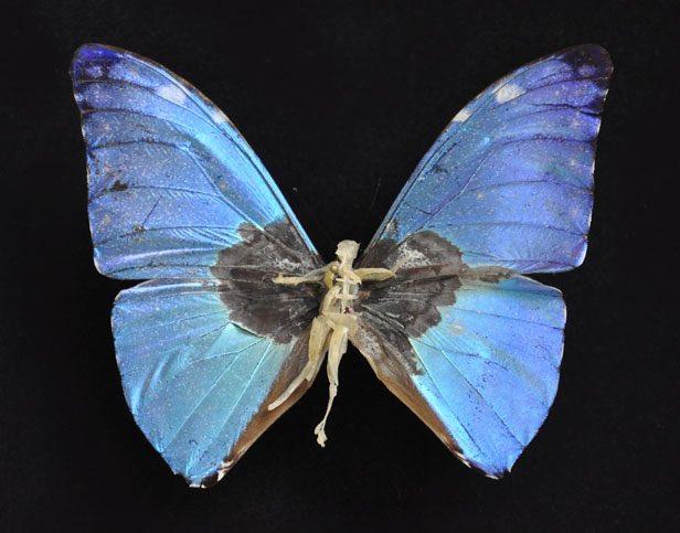 Sombre réparation #23 – 2015 Papillon abimé, ongles, peaux mortes, épingle et boite à spécimen, 26 x 19,5 x 7 cm Collection particulière.