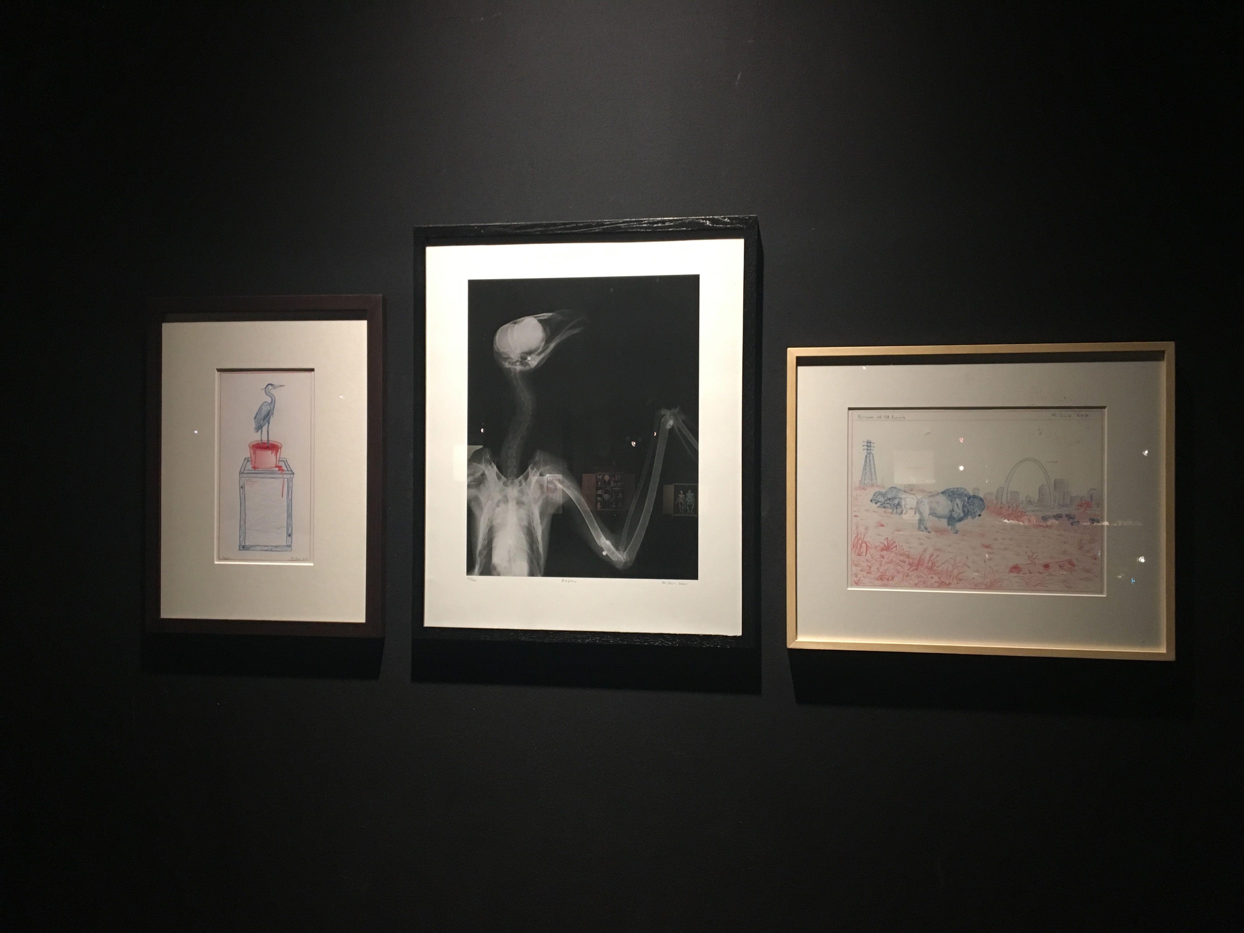 Mark Dion, Museum d'Histoire Naturelle, Palais Longchamp Marseille. Courtesy Mark Dion et Galerie Tanya Bonakdar New York et Galerie IN SITU Paris. Photo : Point contemporain