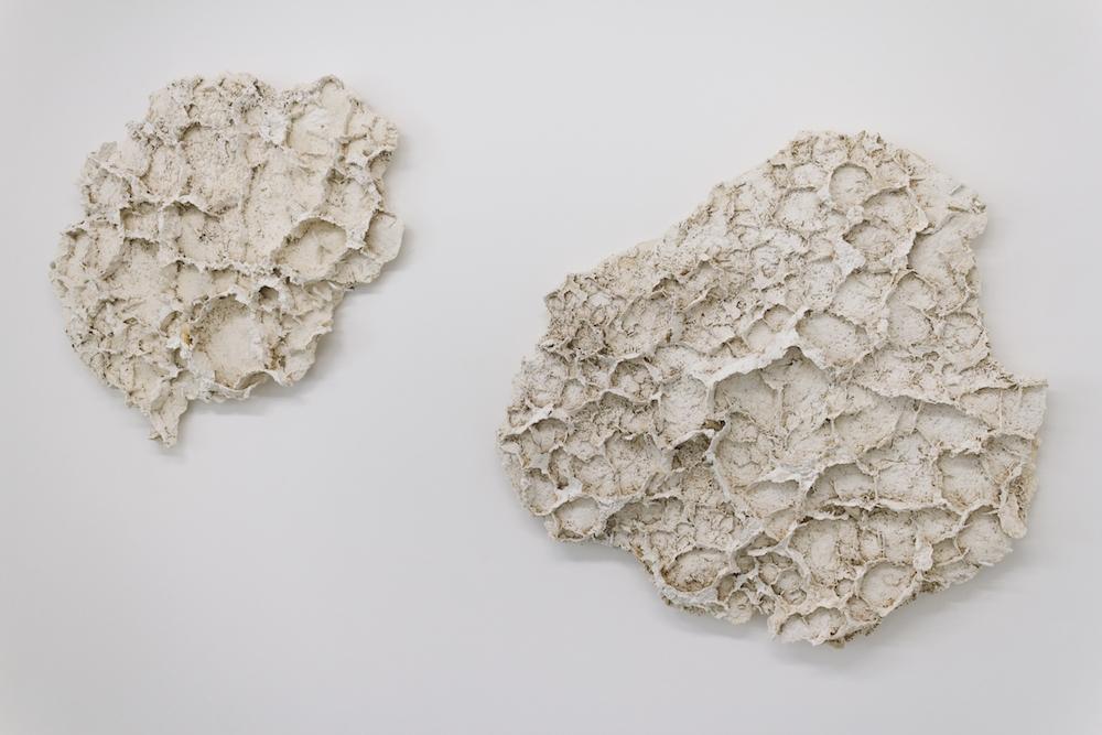 Corail de Terre #1 et #2, 2014. Plâtre, polyester, 110 x 80 x 10 cm