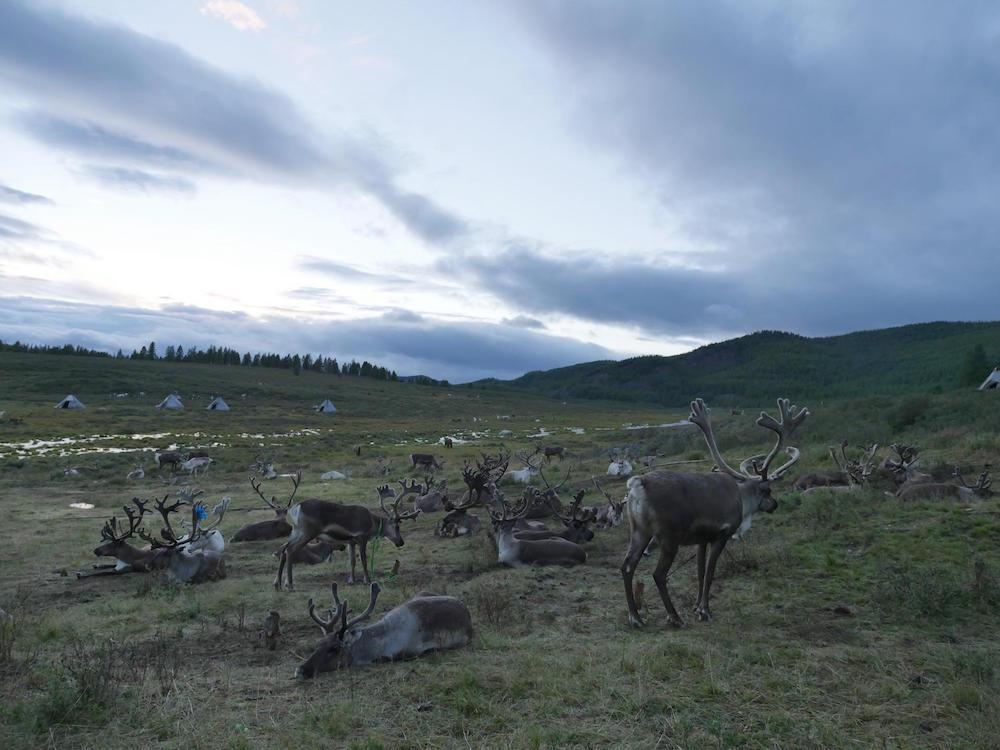Guillaume Barth, La terre tremblera trois fois, 2016. Photographie chez les peuples des rennes, Mongolie. Courtesy artiste.