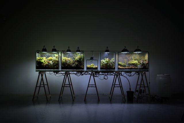 Paul Ducombe, Éden, 2017 Végétaux, éléments radioactifs, éclairages horticoles 150 x 380 x 100 cm Production La Résidence, Dompierre-sur-Besbre, 2017