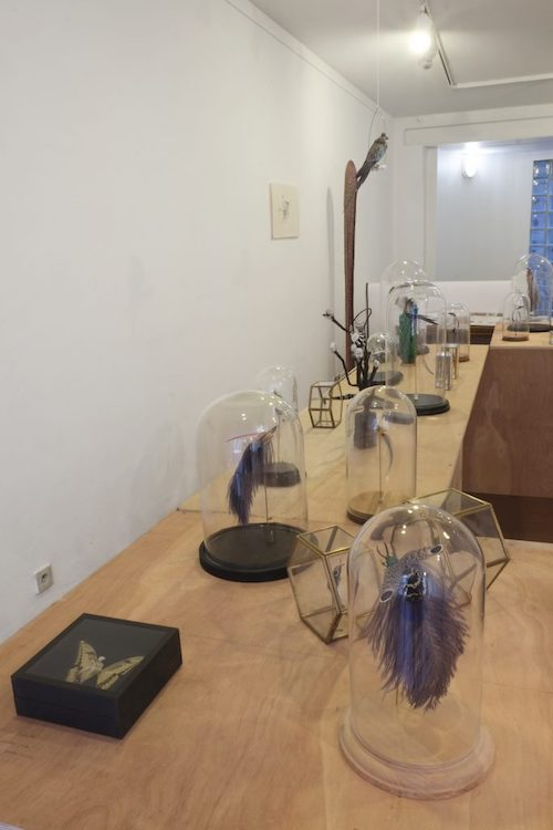 Exposition Chimères, Galerie Neuf, Nancy, 2018, vue d'exposition. Oeuvres : Amandine Gollé.