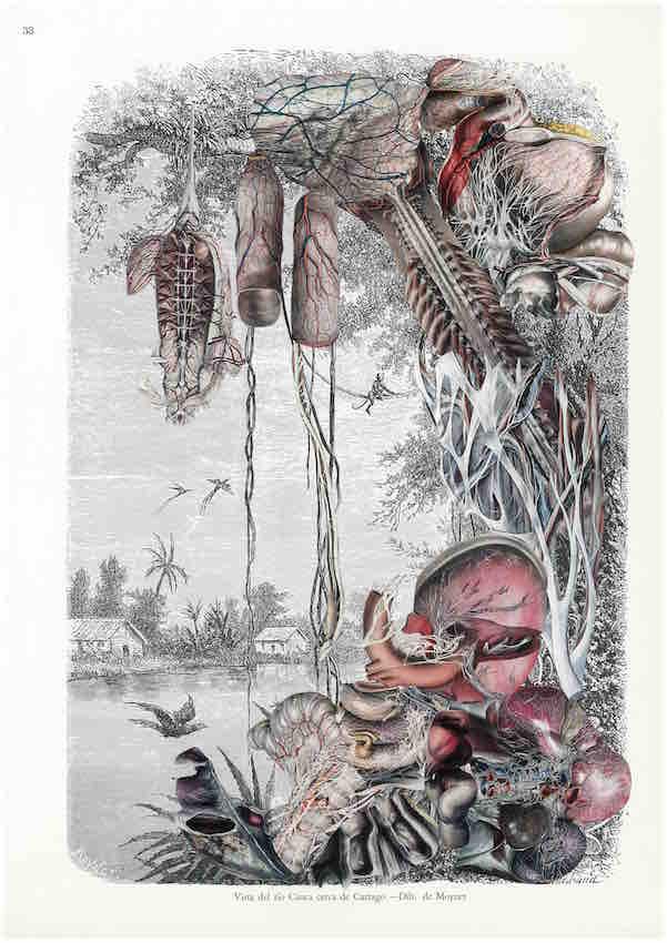 Guillaume Pelloux, Anatomie de la nature #17, 2018. Collage sur papier.