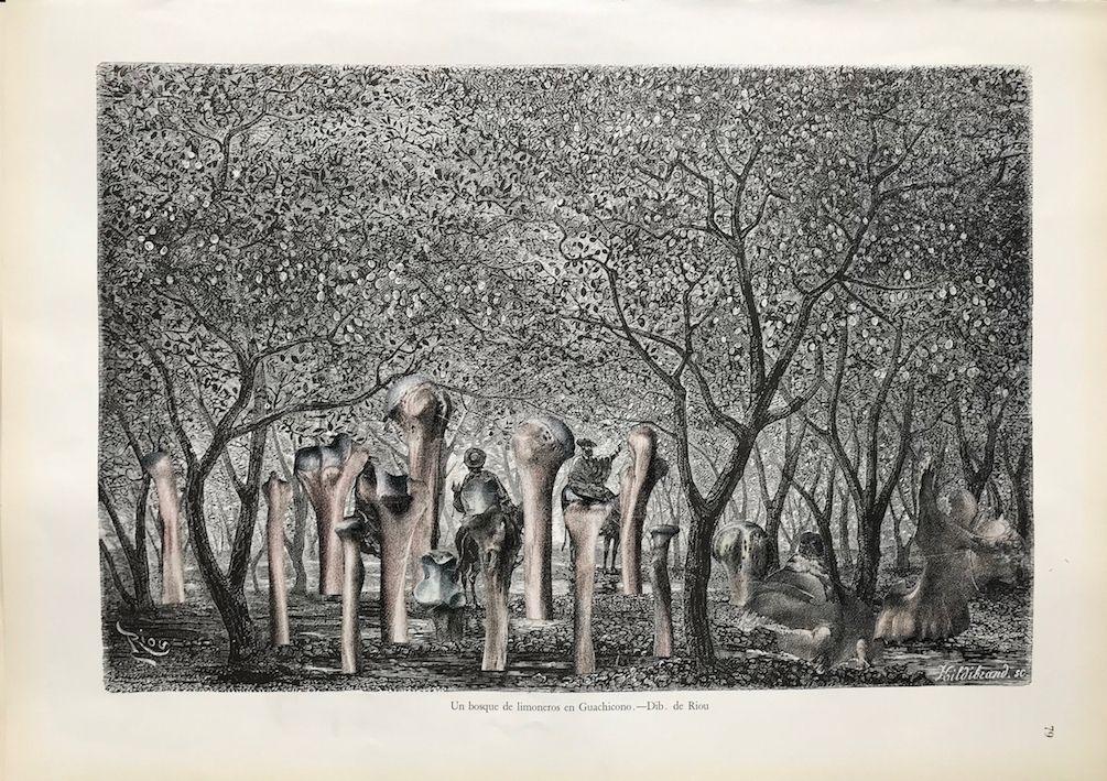 Guillaume Pelloux, Anatomie de la nature #16, 2018. Collage sur papier.