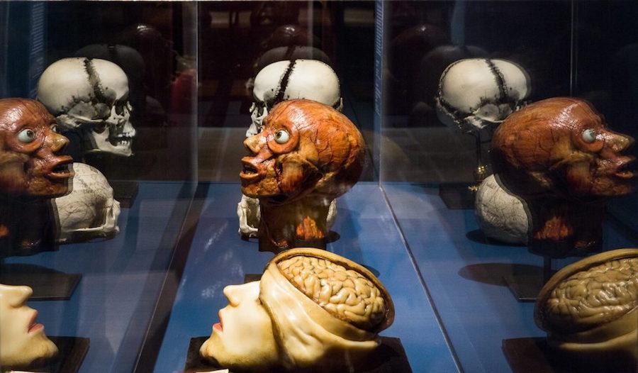 """Collection de la Faculté de médecine de l'Université de Montpellier, Conservatoire d'anatomie, Vue de l'exposition """"Cabinets de curiosités"""", Photo N. Savale © FHEL, 2019"""