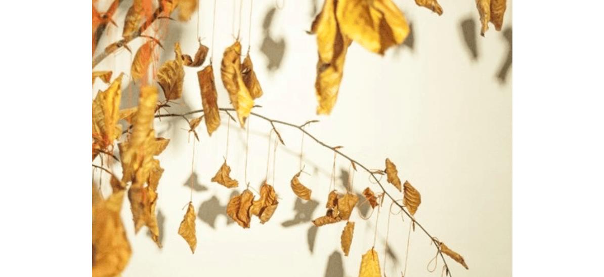 Jérôme PIERRE «Les feuilles de l'être»