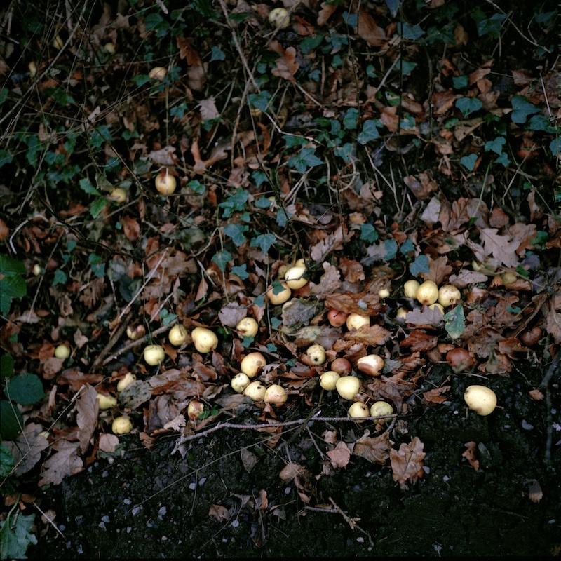 Sarah Carp, Fallen Pears, Série Roots, 2011