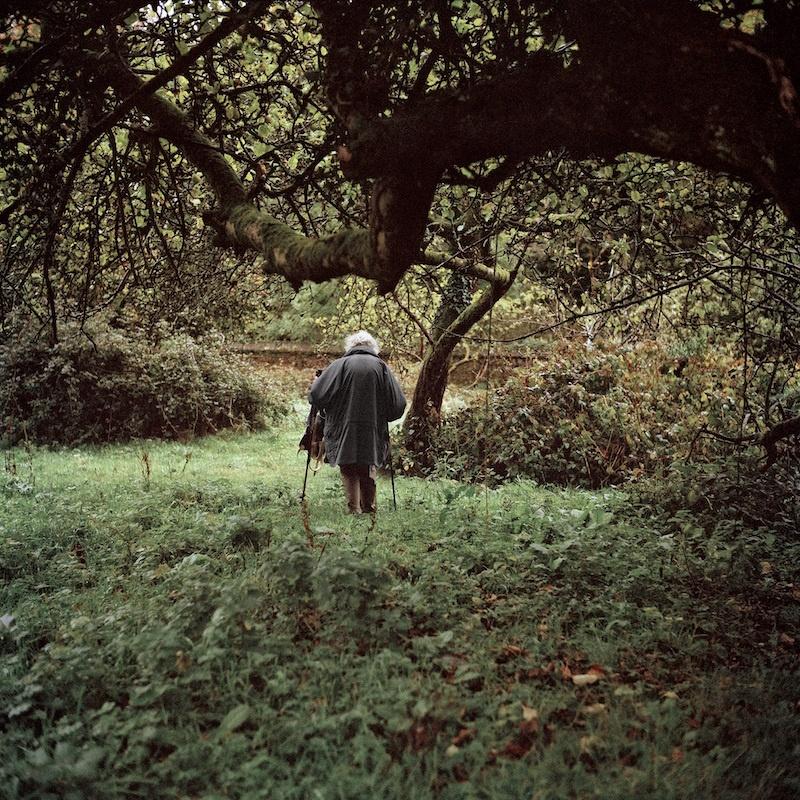 Sarah Carp, Old Orchard, 2011