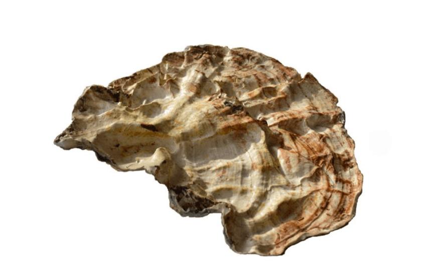 Mehr Pilz – ou peut-être plus de champignons, Silicone, 48×42 cm, 2019 (© B.Schroeder)