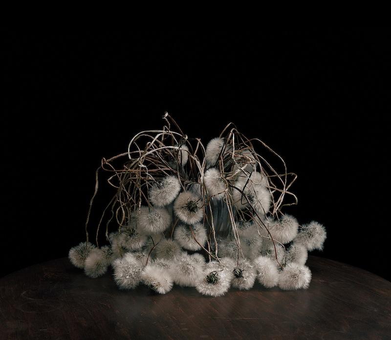 Brigitte Lustenberger, Flowers XIX, Chromogenic print