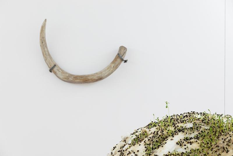 Défense de mammouth – collection de la cellule d'archéologie du Lot, Sans titre (boule de lentilles) - Michel Blazy, Vue de l'exposition Pendant que les champs brûlent, Maison des Arts Georges et Claude Pompidou, 2020. Photo © Yohann Gozard