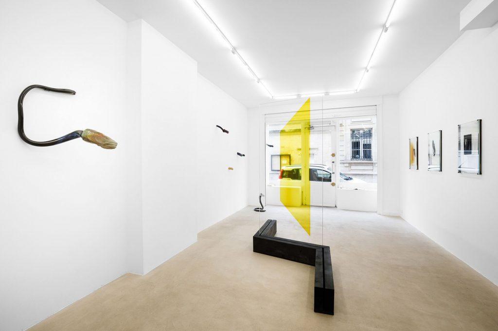 Vue de l'exposition de Pia Rondé & Fabien Saleil « Cryptide », Galerie Valeria Cetraro, 2020Courtesy des artistes et Galerie Valeria CetraroPhoto Salim Santa Lucia