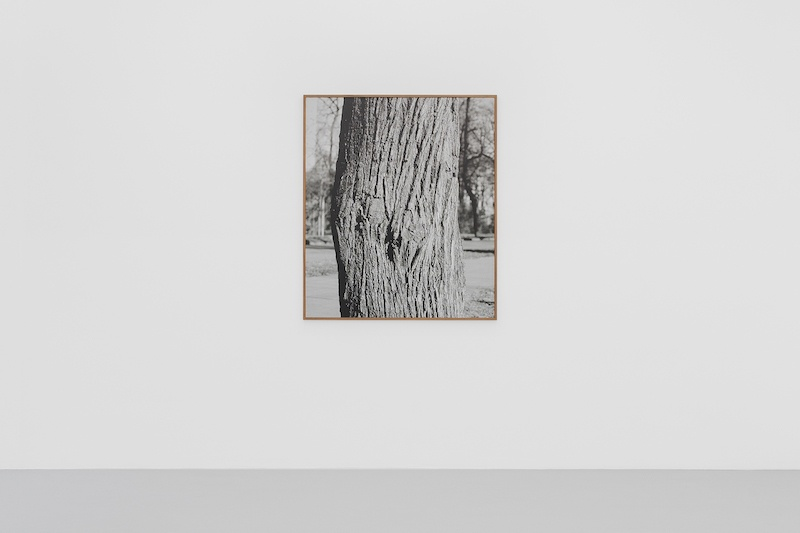 Corinne Silva, The Score _ Tilia platyphyllos, 2020, Giclée print on Baryta paper, 111 x 129.2 cm (Ed. of 3) Courtesy Irène Laub Gallery, photo by Hugard and Vanoverschelde