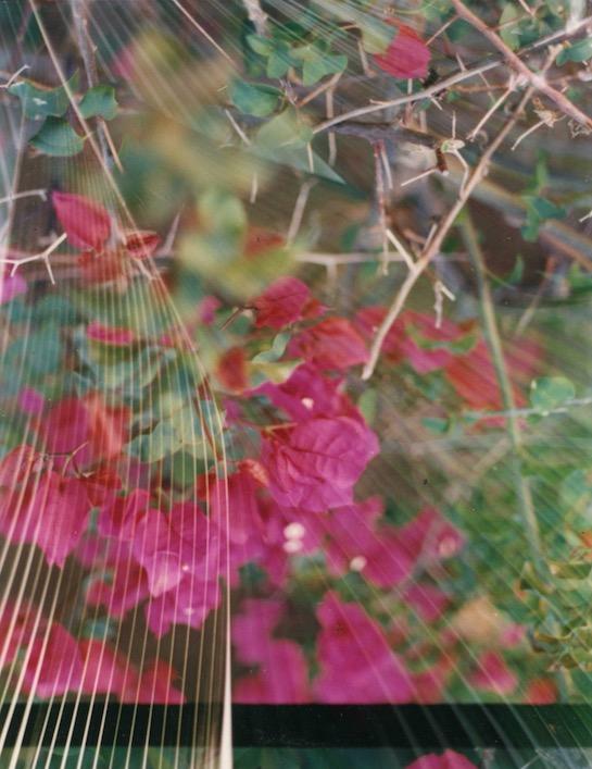 Gayle Chong Kwan, Kew/Pamplemousse 5, 2001 C-type photographic print 50 x 40 cm Ed. 3 + 1AP