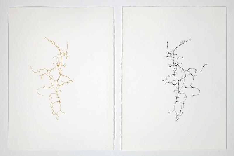 Léa Barbazanges - Dessin d'une clémentine - 2010 - Filaments d'une clémentine assemblés en un dessin et son pendant à l'encre de chine – Diptyque - 28 × 38 cm chaque