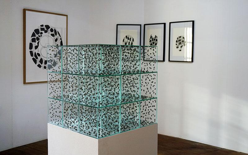 Jean Claude Ruggirello, Pink Noise 01 verre abeilles naturalisées, 60 x 60 x 60 cm 1992