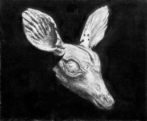 Marko Velk, Rustle, 2019, 50 x 60 cm, fusain sur papier. Courtesy de l'artiste et de la galerie Odile Ouizeman