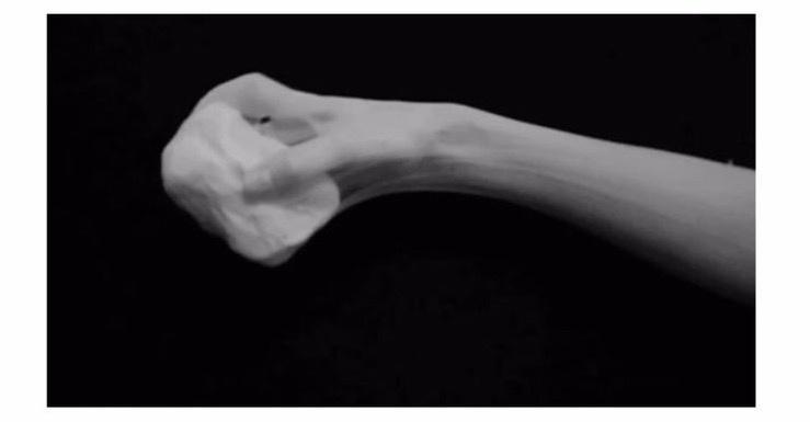 La main ©️Jeanne Révay