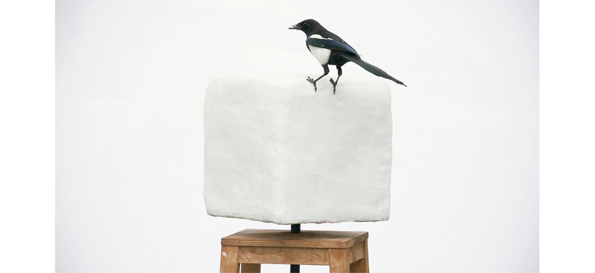 BENJAMIN MOULY, FOR THE BIRDS