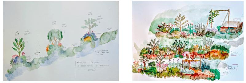 Création de terrasses agroforestières. Le Nouveau Ministère de l'Agriculture pour le Cercle de la régénération, dessin préparatoire, 2020 ©Le NMA