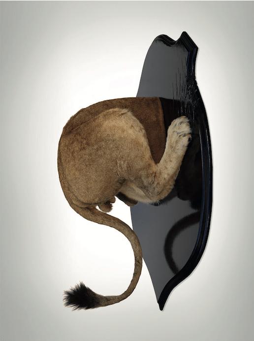 Ghyslain Bertholon, Troché de face, Lion, 2015. Taxidermie et bois laqué, 130 x 100 x 48,5 cm Courtesy artiste et Olivier Castaing School Gallery