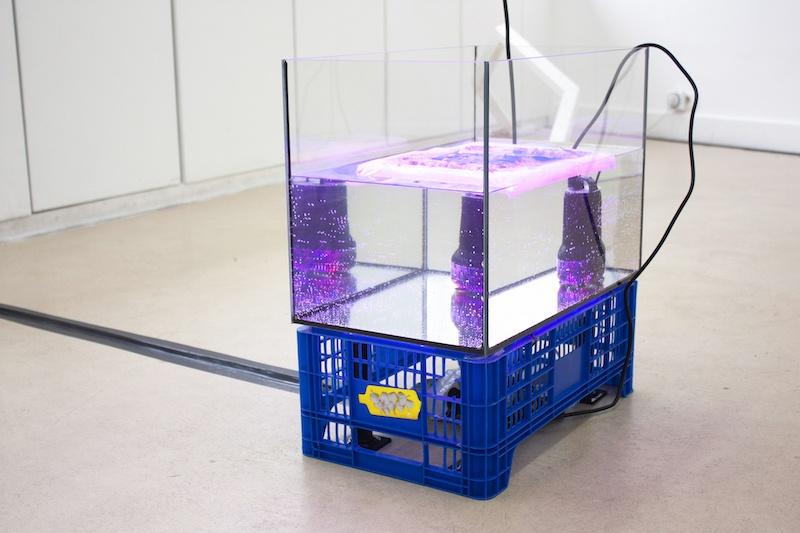 Marcos Uriondo, Prêt à être prêt, 2021. Installation, caisse de récolte, aquarium 50L, pompe d'eau, impression hydrographique  sur silicone. Dimensions variables.
