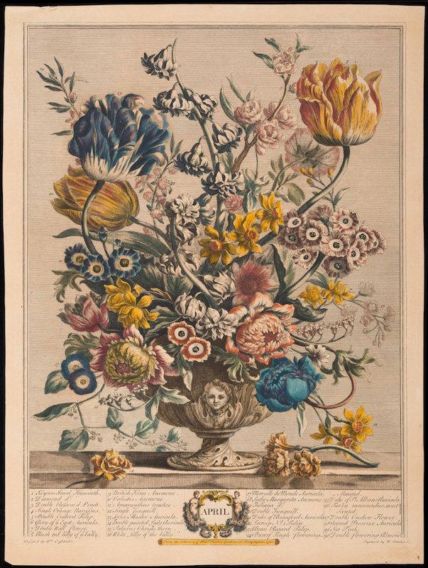 robert furber (pépiniériste), pieter casteels (dessinateur), henry fletcher (graveur), twelve months of flowers _ april, gravure en couleur, édition de the dietz press circa 1930