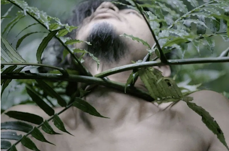Zheng Bo, Pteridophilia, 2016 ongoing Supported by Kyoto City University of Arts Art Gallery, the 11th Taipei Biennial, Villa Vassilieff and Pernod Ricard Fellowship, and TheCube project Space