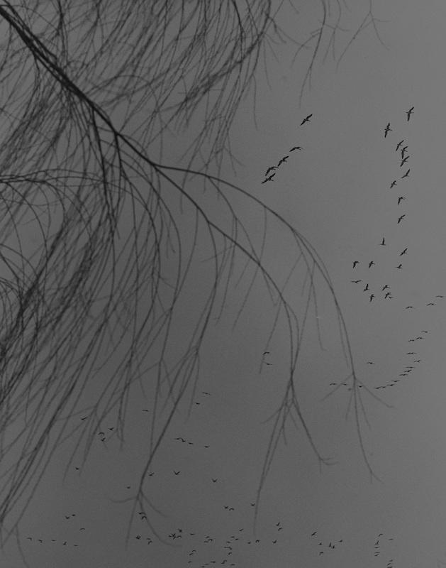 Byung-Hun Min, Série Bird, tb196, 2020.Tirage argentique Edition 5
