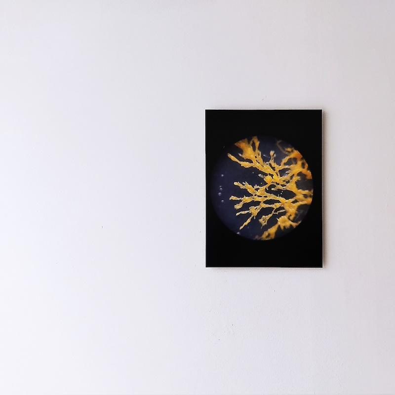 Honky-Tonk-Fields_Pernelle-Gaufillet-Ventura_Formation_Physarum-Polycephalum-et-boîtes-de-Petri_2021_detail-2_credit-photo-TENDERFLUID