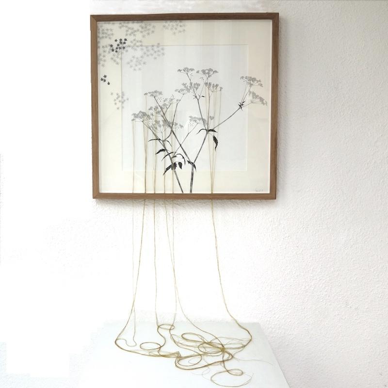 Ursula Caruel, Chaerophyllum sylvestre 42 x 42 cm / mine de plomb, encre et fil