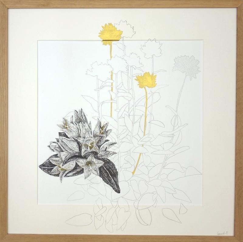 Ursula Caruel, Antyllis montana 42 x 42 cm / mine de plomb, encre, dorure et fil