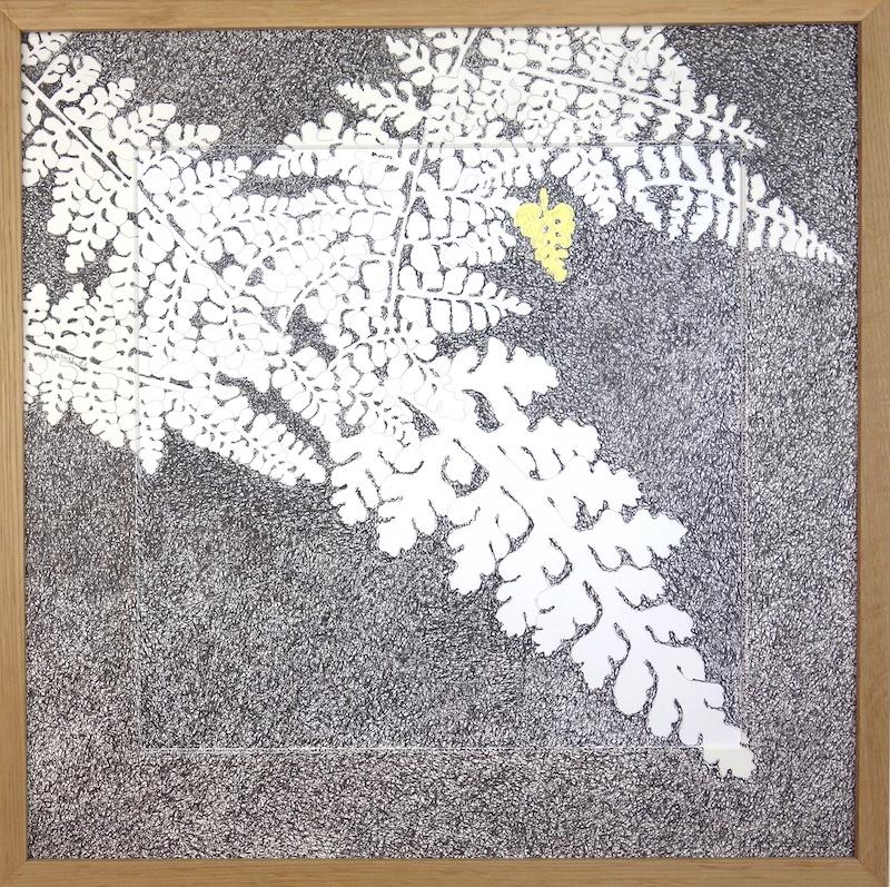 Ursula Caruel, Asplenium halleri 42 x 42 cm / mine de plomb, encre et dorure