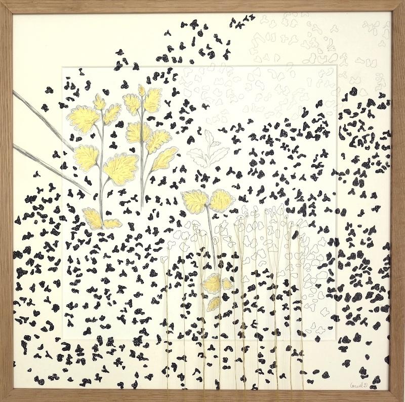 Ursula Caruel, Calamintha nepeta 42 x 42 cm / mine de plomb, dorure, encre et fil