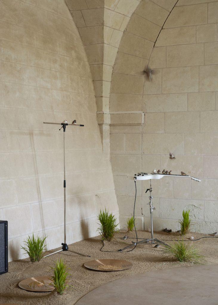Céleste Boursier-Mougenot, From here to ear, 2009. Collection Antoine de Galbert, Paris. Photo: Julia Andréone