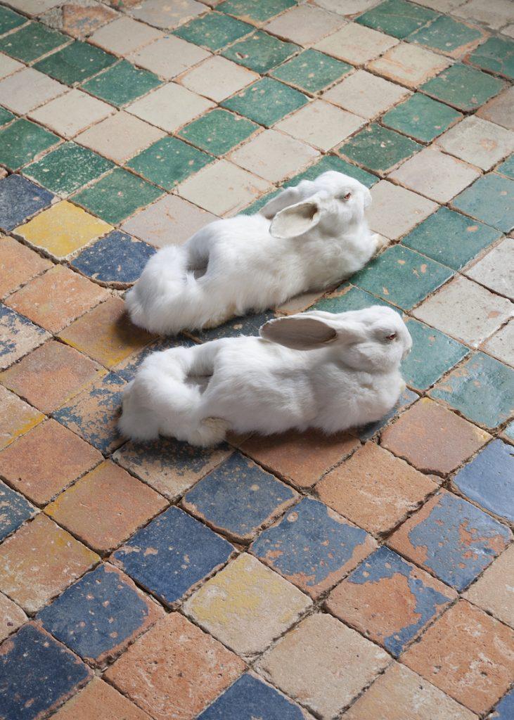 Wim Delvoye, Sans titre (Rabbit Slippers), 2005. Collection Antoine de Galbert, Paris. Photo: Julia Andréone